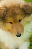 大牧羊犬月神年轻人 免版税库存照片