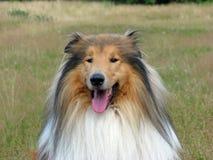 大牧羊犬狗纵向 免版税库存照片