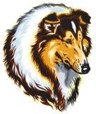 大牧羊犬头 免版税库存图片