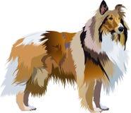 大牧羊犬 免版税图库摄影