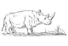 大犀牛动物 库存照片