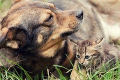 大狗和一只小小猫 库存照片