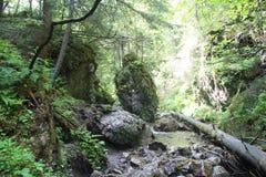 大猎鹰山沟,斯洛伐克天堂,斯洛伐克 库存图片