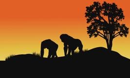 大猩猩剪影在领域的 免版税图库摄影