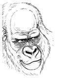 大猩猩画象-手钓丝图画 免版税库存照片