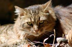 大猫纵向 免版税图库摄影