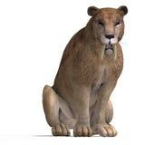 大猫sabbertooth 皇族释放例证