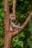 大猴子哺养的婴孩坐一棵树在密林在一个晴天 库存照片