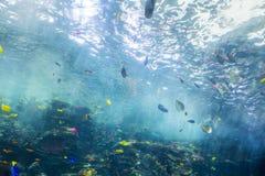 大珊瑚礁和鱼 图库摄影