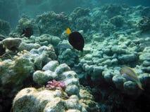 大珊瑚礁海底 库存照片