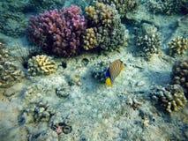 大珊瑚礁海底 免版税库存图片