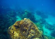大珊瑚礁水下的照片 与底下安心的深刻的蓝色海视图 图库摄影
