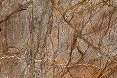 大理石优美的平板 免版税库存照片