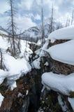 大理石峡谷kootenay雪冬天 免版税库存图片