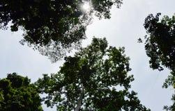 大白色丝光木棉或木棉树在阳光和天空背景在森林里 库存照片