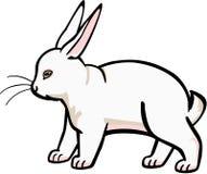大白色兔子 库存例证