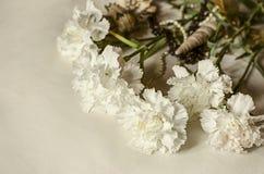 大白色康乃馨花束与壳和小珠的盖了轻的布料 免版税库存照片