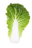 大白菜叶子 库存图片
