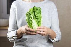 大白菜在女性手上 免版税图库摄影