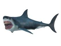 大白鲨鱼左拐 库存照片