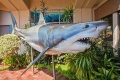 大白鲨鱼玻璃纤维   免版税库存图片