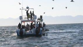 大白鲨鱼笼子潜水 股票录像