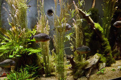 大的水族馆 免版税库存图片