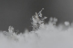 大的雪花弄湿了 库存图片