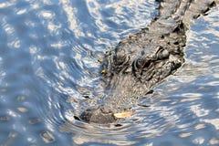 大的鳄鱼 免版税库存图片