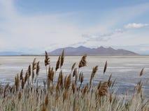 大盐湖,犹他看法  库存图片
