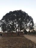大相当绿色树 库存照片