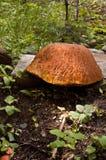 大真菌 免版税图库摄影