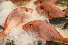 大眼睛海鲷或海鲷macrophthalmus在冰在希腊鱼市上钓鱼待售 库存照片
