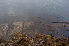 大眼镜和海草在晚上处于低潮中报道防堤的被挖掘的块 库存图片