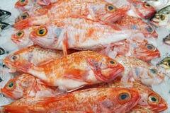 大眼鲷在显示的海洋栖息处的图象在超级市场 新鲜谁 免版税库存照片