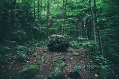 大石头在不顾一个大黑暗的森林的一块沼地 库存图片