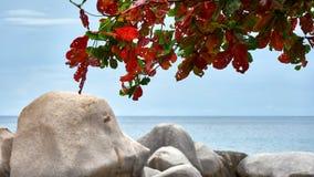 大石头和读的叶子 免版税库存照片