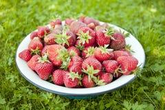 大碗草莓 图库摄影