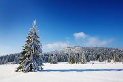 大积雪的结构树 免版税库存照片