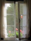 大竺葵在老农舍窗口里 免版税图库摄影