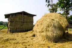 大米秸杆和小屋在领域 库存照片
