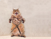 大粗野的猫是非常滑稽的身分 groomer 13 库存照片