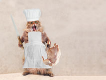 大粗野的猫是非常滑稽的身分,厨师14 免版税库存照片