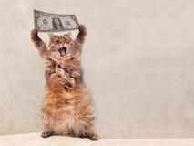 大粗野的猫是非常滑稽的身分 风雨棚13 免版税图库摄影