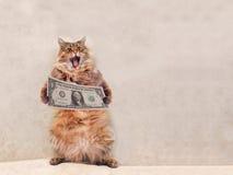 大粗野的猫是非常滑稽的身分 风雨棚6 免版税库存图片