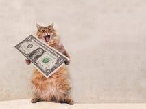 大粗野的猫是非常滑稽的身分 风雨棚7 库存照片