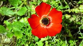 大红色花在沼地 免版税图库摄影