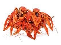 大红色螃蟹 免版税图库摄影