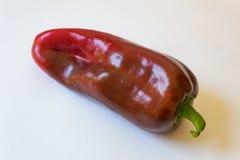 大红色辣椒的果实annuum Cubanelle古巴意大利油煎的胡椒的接近的看法 图库摄影