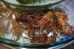 大红色龙虾 免版税图库摄影